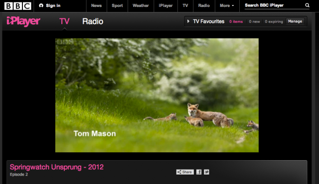 My fox family features on Springwatch