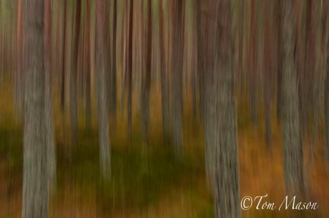 Tom_Mason_November 26, 2012-scotland-DSC_4367