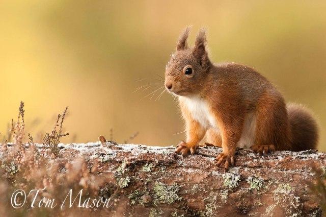 Tom_Mason_November 29, 2012-squirrel3-DSC_5780